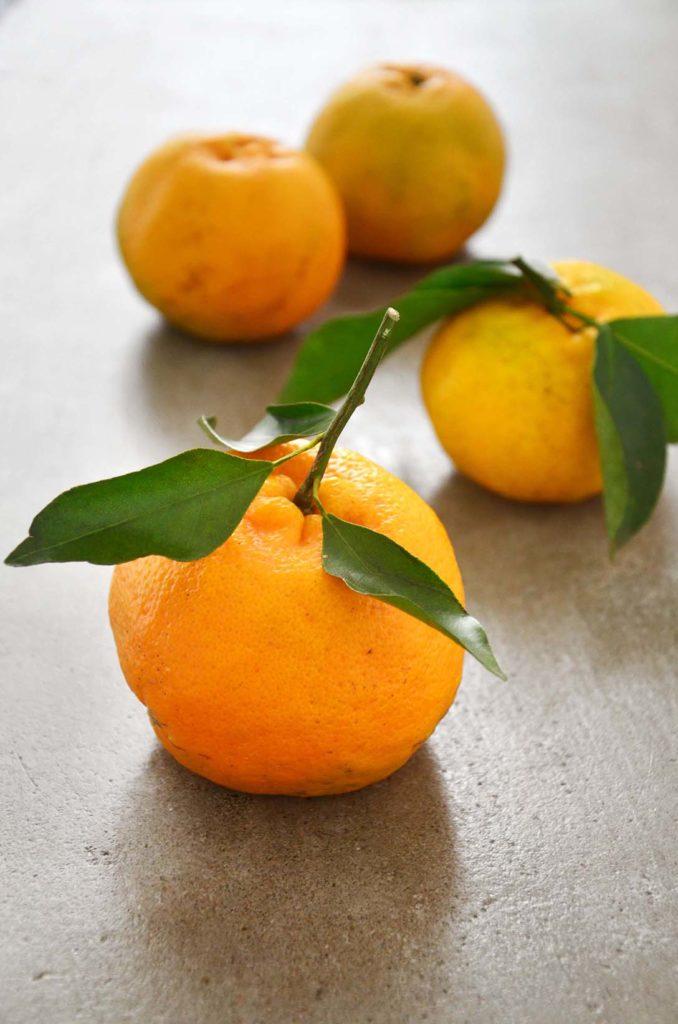 tangerina, mexerica e bergamota